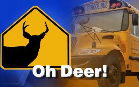 Bus: 1 Deer: 0