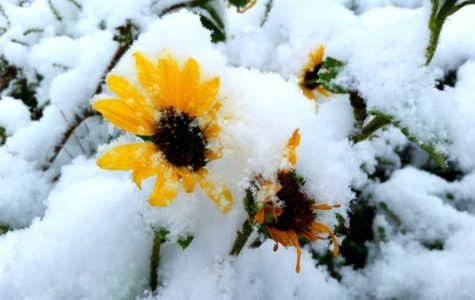 April Snow Showers Bring Dead May Flowers